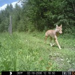 Summer 2014 wildlife pics 076